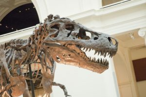 T. rex Sue at the Chicago Field Museum